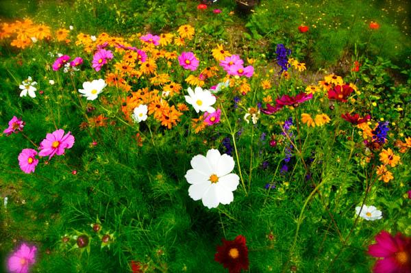 Cut-flower-seeds-h_LRG
